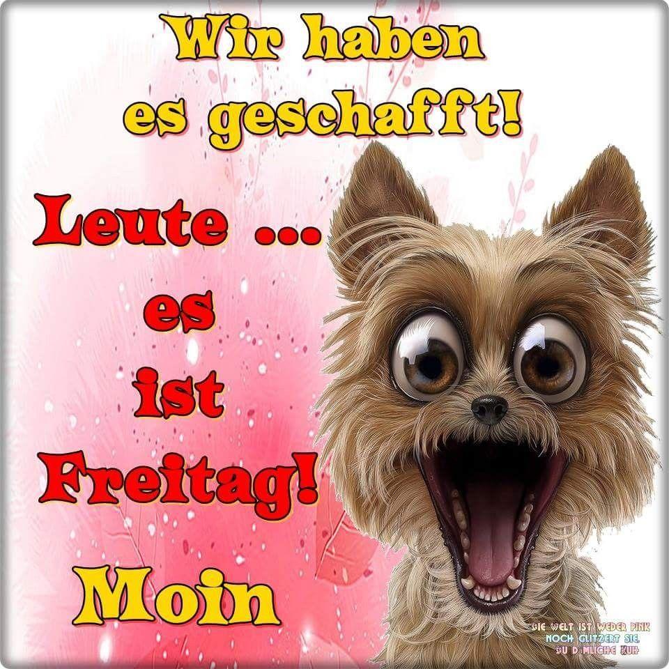 Schönen Freitag Gif Lustig Bilder Und Sprüche Für Whatsapp