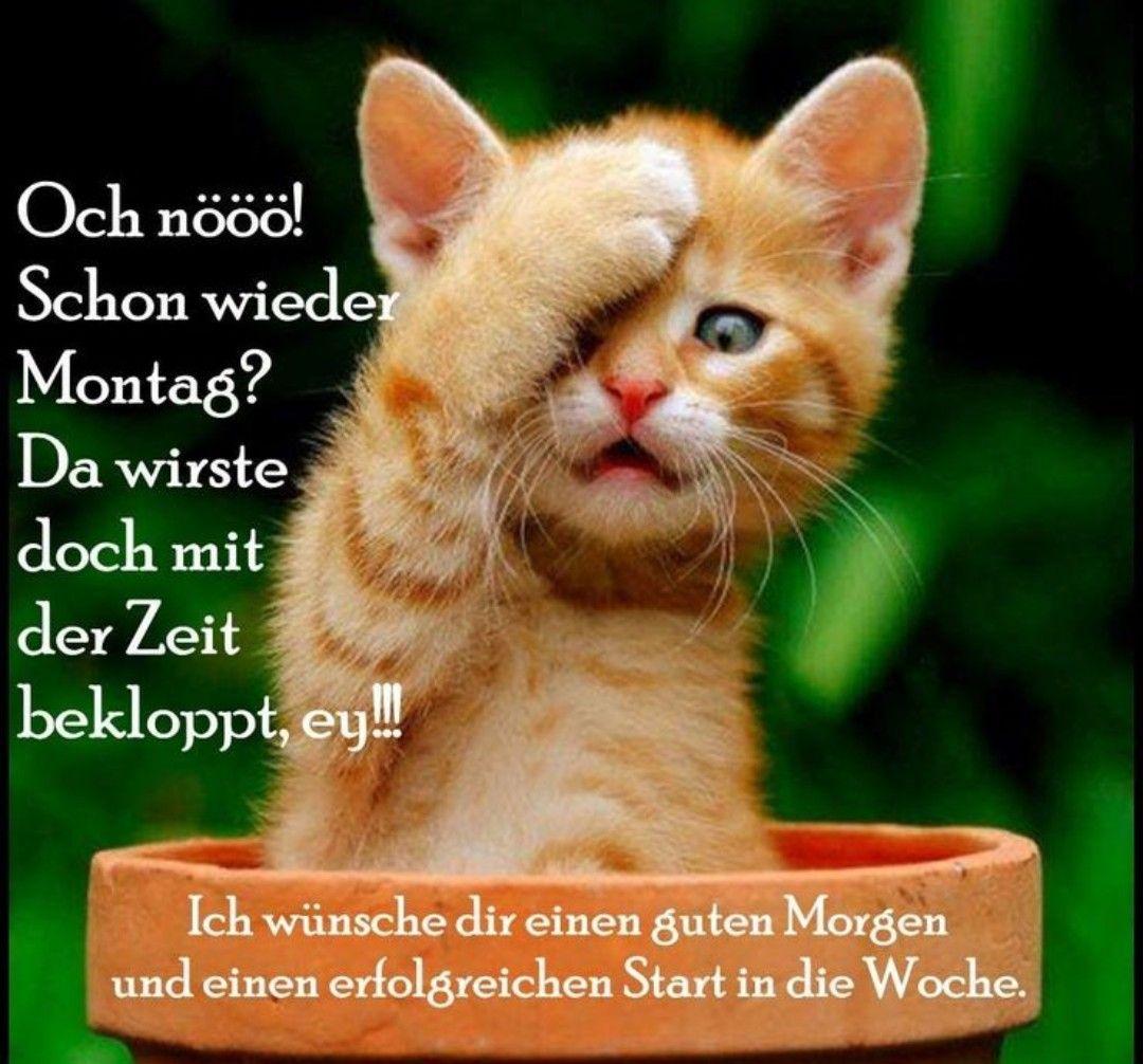 Schönen Montag Katze Bilder Und Sprüche Für Whatsapp Und