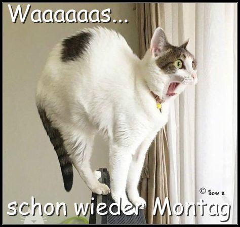Lustige Sonntagabend Spruche Bilder Und Spruche Fur Whatsapp Und