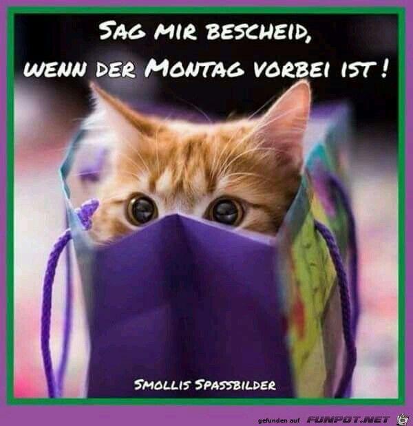 Lustige Montag Spruche Bilder Bilder Und Spruche Fur Whatsapp Und