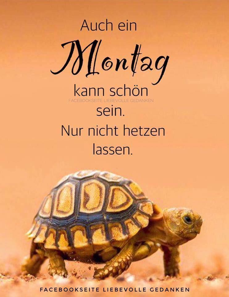 Status Sprüche Montag Bilder Und Sprüche Für Whatsapp Und