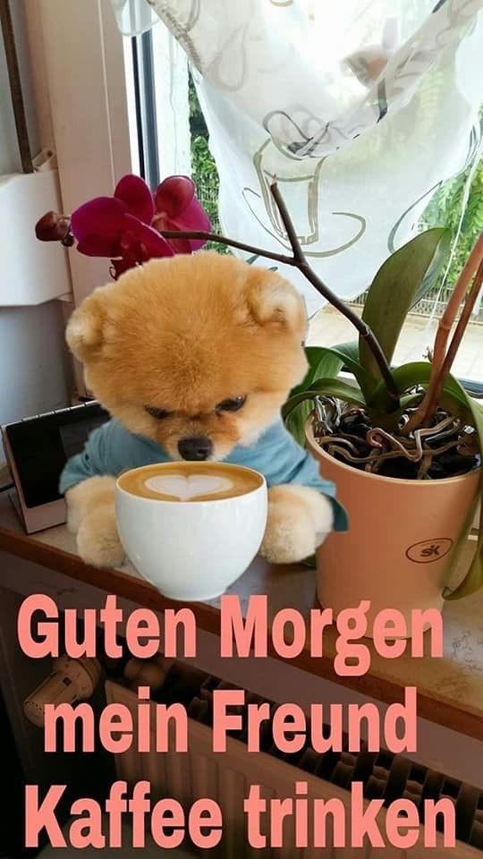 Bilder Guten Morgen Kaffee Bilder Und Sprüche Für Whatsapp