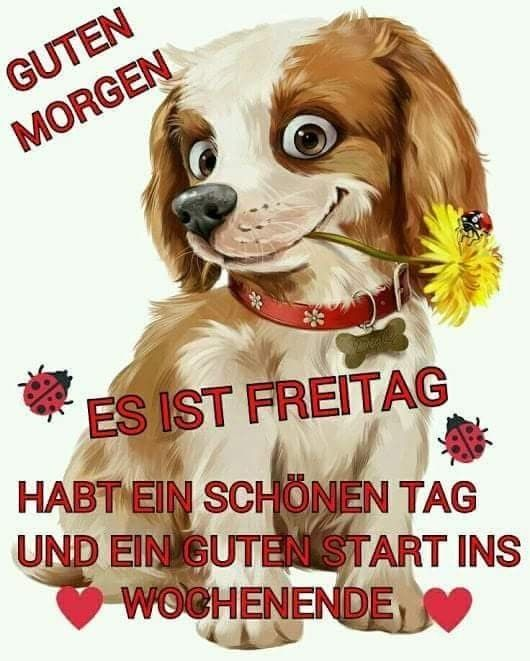 Bilder Lustig Guten Morgen Bilder Und Sprüche Für Whatsapp