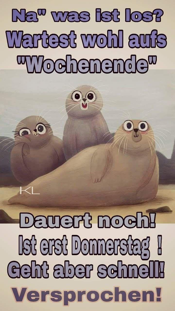 Schönen Donnerstag Witzig Bilder Und Sprüche Für Whatsapp