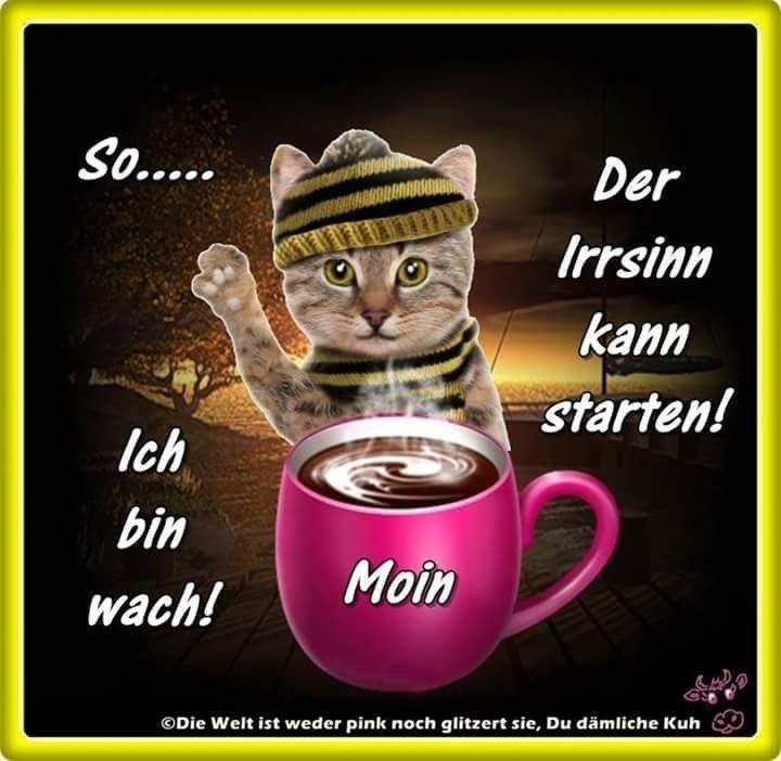 Guten Morgen Bärchen Bilder Und Sprüche Für Whatsapp Und
