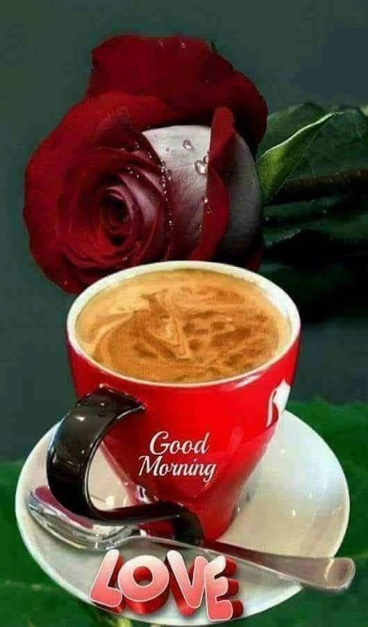Guten morgen blumen bilder - Guten morgen blumen bilder