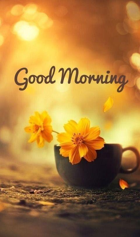 Guten morgen grüße bilder - Guten morgen grüße bilder