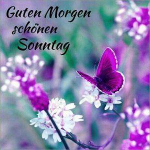 Guten Morgen Sonntag Bilder Kostenlos Bilder Und Sprüche Für