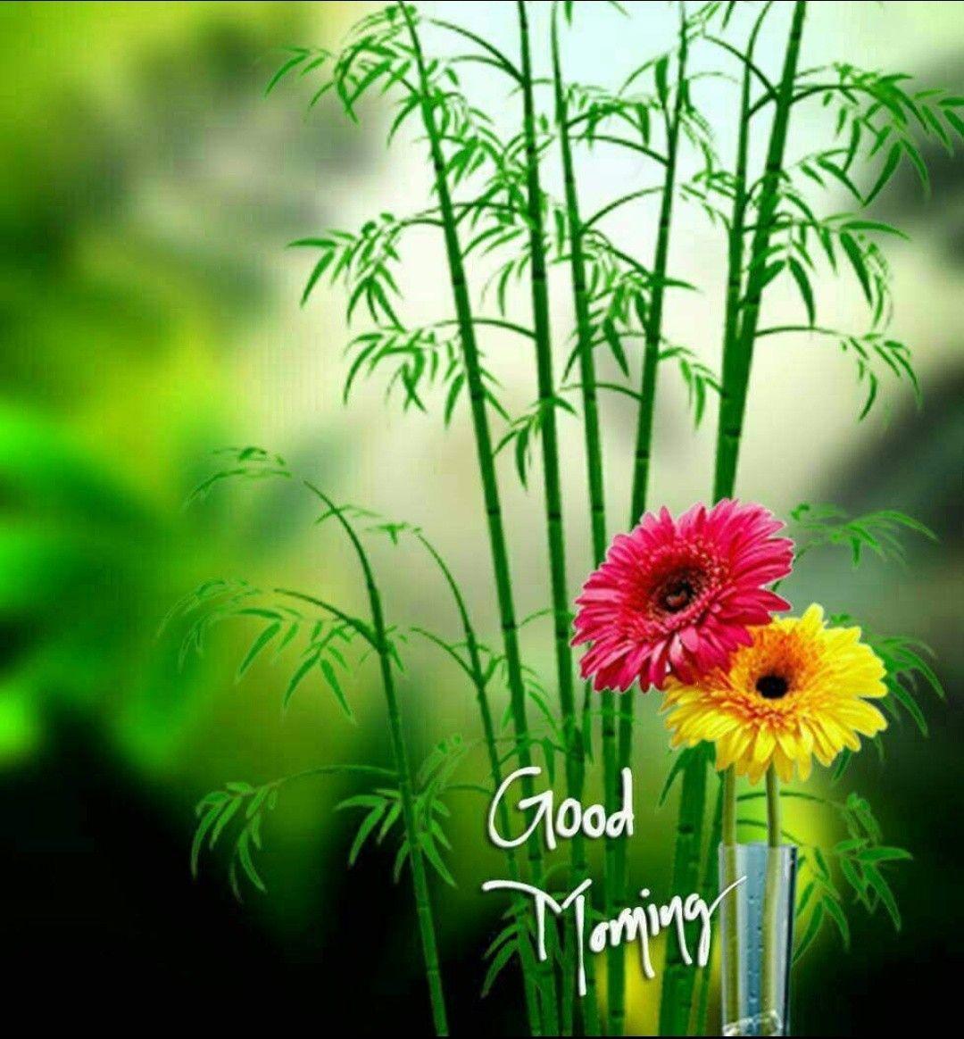 Guten morgen sweetheart - Guten morgen sweetheart