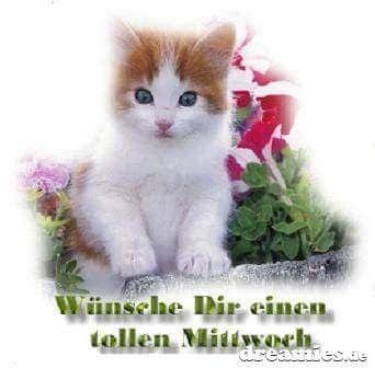 Lustige Mittwoch Bilder Kostenlos Bilder Und Spruche Fur Whatsapp