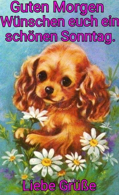 Schönen Sonntag Teddy Bilder Und Sprüche Für Whatsapp Und