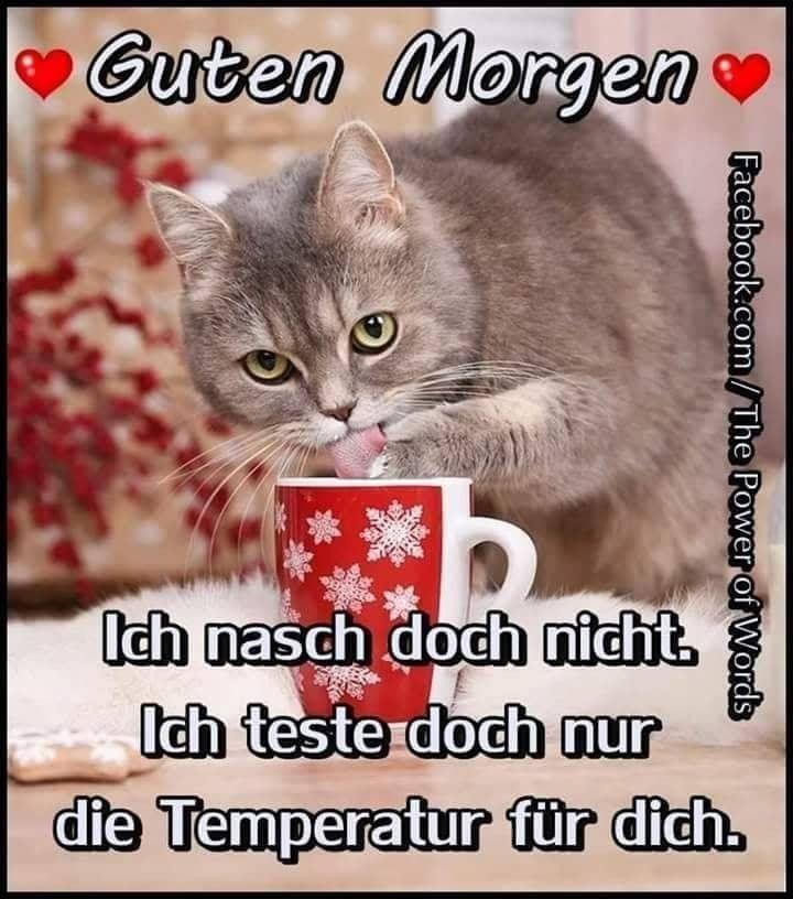 Sonntag Guten Morgen Bilder Und Sprüche Für Whatsapp Und