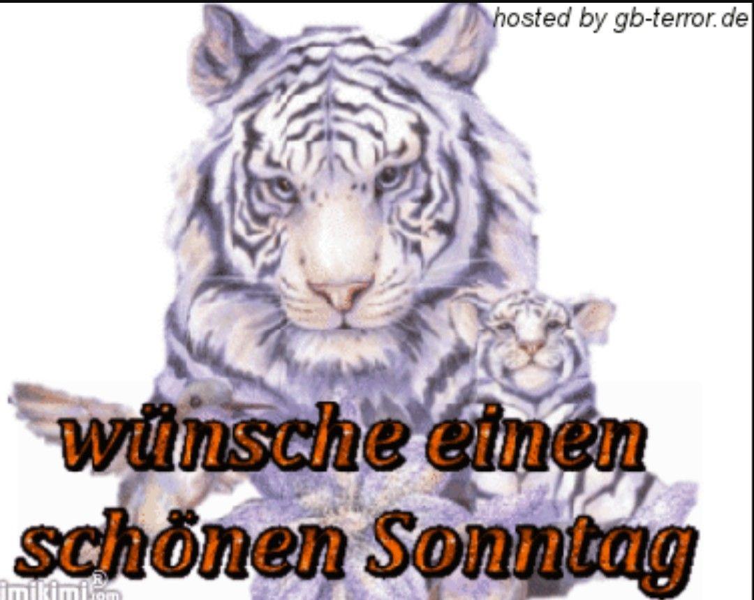 Sprüche Zum Sonntag Lustig Bilder Und Sprüche Für Whatsapp Und