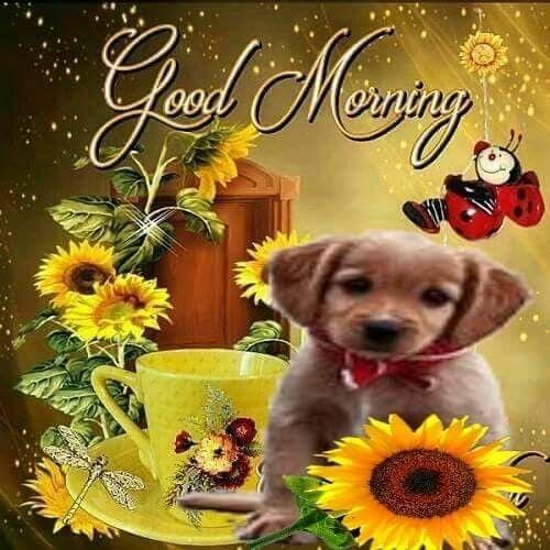 Wünsche Dir Guten Morgen Bilder Und Sprüche Für Whatsapp