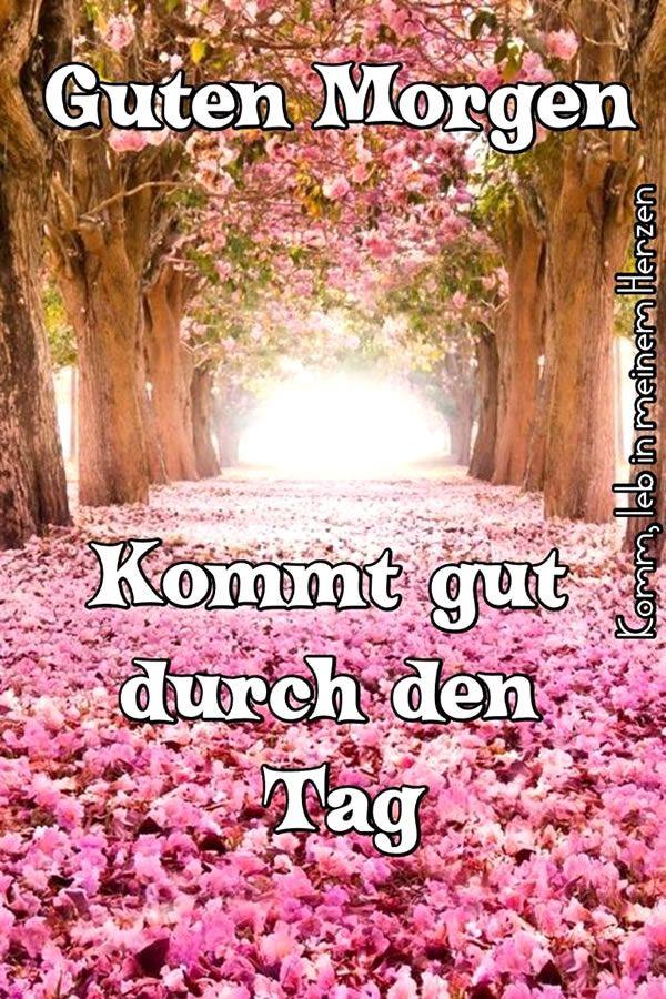 Whatsapp Guten Morgen Bilder Und Sprüche Für Whatsapp Und Facebook