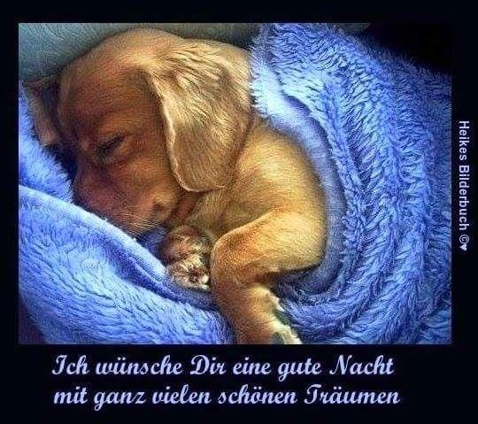 Spruch Gute Nacht Bilder Und Sprüche Für Whatsapp Und