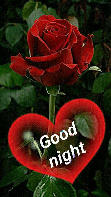 Gute abend gute nacht - Gute abend gute nacht