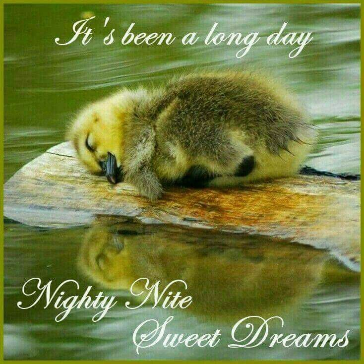 Gute nacht schriftzug - Gute nacht schriftzug