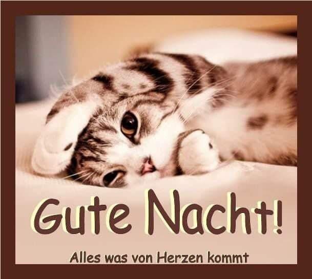 Gute Nacht Sprüche Lustig Facebook Bilder Und Sprüche Für