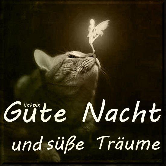 Guten nacht meaning - Guten nacht meaning