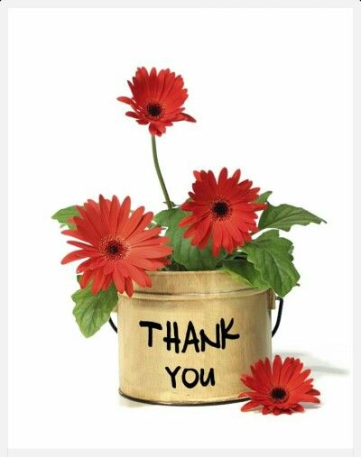 Zum geburtstag danke sagen - Zum geburtstag danke sagen