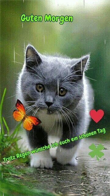 Guten Morgen Katzen Bilder Bilder Und Sprüche Für Whatsapp
