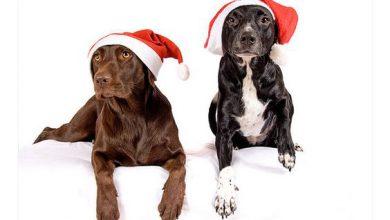 3. advent hund bilder