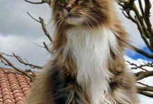 A Cute Cat Picture Bilder 220x150 - A Cute Cat Picture Bilder