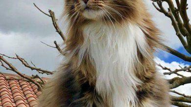 A Cute Cat Picture Bilder 390x220 - A Cute Cat Picture Bilder