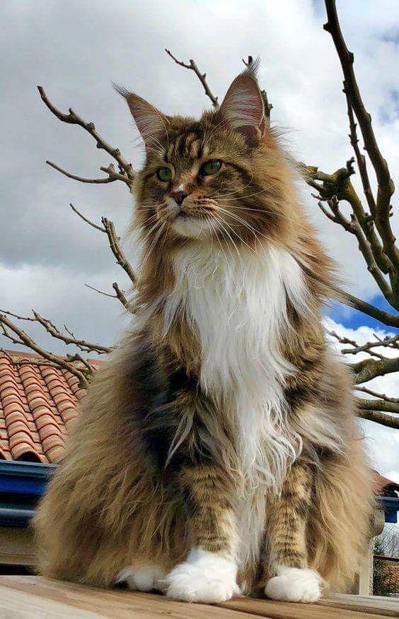 A Cute Cat Picture Bilder - A Cute Cat Picture Bilder