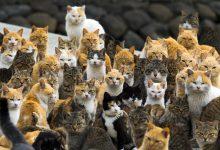 A Picture Of A Cat Bilder 220x150 - A Picture Of A Cat Bilder