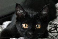 Adorable Cat Images Bilder 220x150 - Adorable Cat Images Bilder
