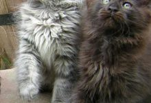 Adorable Cat Pictures Bilder 220x150 - Adorable Cat Pictures Bilder