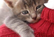 All Cat Image Bilder 220x150 - All Cat Image Bilder
