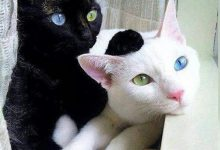 All Cat Photo Bilder 220x150 - All Cat Photo Bilder