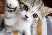 Alle Katzenrassen 220x150 - Alle Katzenrassen