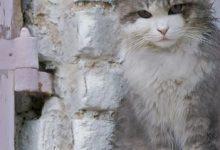 Alle Katzenrassen Mit Bildern 220x150 - Alle Katzenrassen Mit Bildern