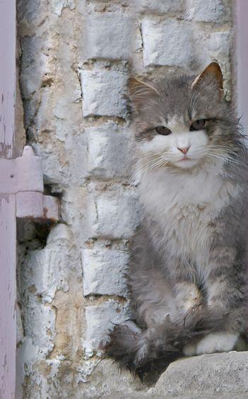 Alle Katzenrassen Mit Bildern - Alle Katzenrassen Mit Bildern