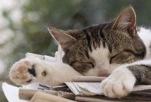 Alle Katzenrassen Mit Foto 220x150 - Alle Katzenrassen Mit Foto