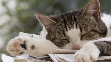 Alle Katzenrassen Mit Foto 390x220 - Alle Katzenrassen Mit Foto