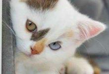 Alles Über Katzen 220x150 - Alles Über Katzen