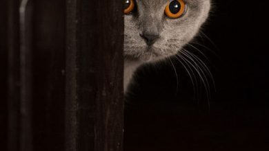 Alter Katzen 390x220 - Alter Katzen