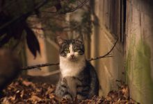 Amazing Cat Photography Bilder 220x150 - Amazing Cat Photography Bilder