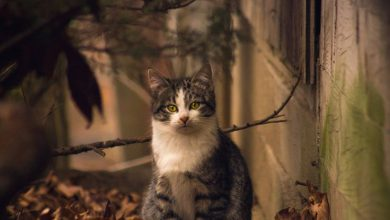 Amazing Cat Photography Bilder 390x220 - Amazing Cat Photography Bilder