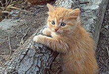 Amazing Cat Photos Bilder 220x150 - Amazing Cat Photos Bilder