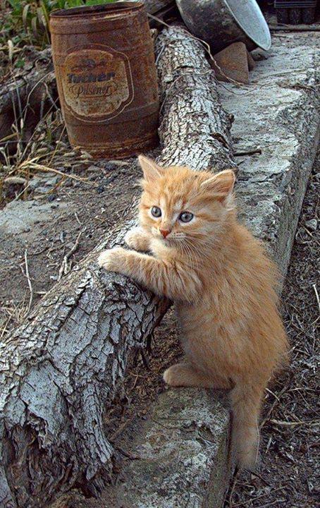 Amazing Cat Photos Bilder - Amazing Cat Photos Bilder