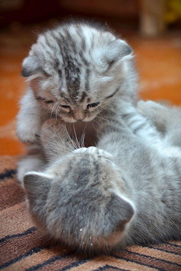 Amazing Cat Pics Bilder - Amazing Cat Pics Bilder
