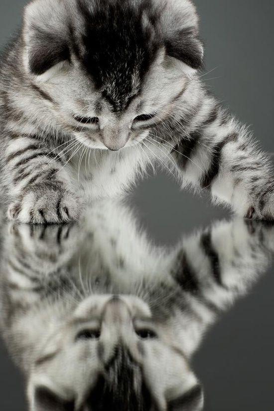 An Image Of A Cat Bilder - An Image Of A Cat Bilder