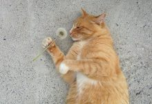 Animals Cat Images Bilder 220x150 - Animals Cat Images Bilder