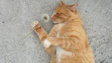 Animals Cat Images Bilder 390x220 - Animals Cat Images Bilder